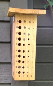 Bee block 131150 during summer 2013 with 7 completed Osmia lignaria nests